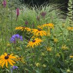 Flowers bringing beauty to community spaces