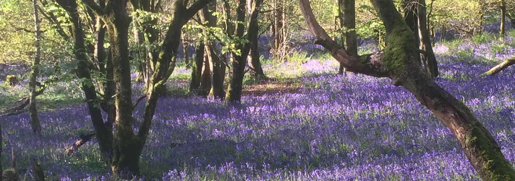 Dinefwr-Dynefor-Castle-Woods-Nature-reserve-Llandeilo