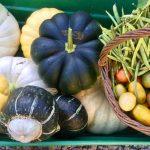 Community garden crop