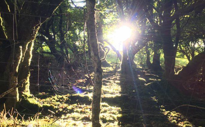 Brechfa Mountain Bike Trail