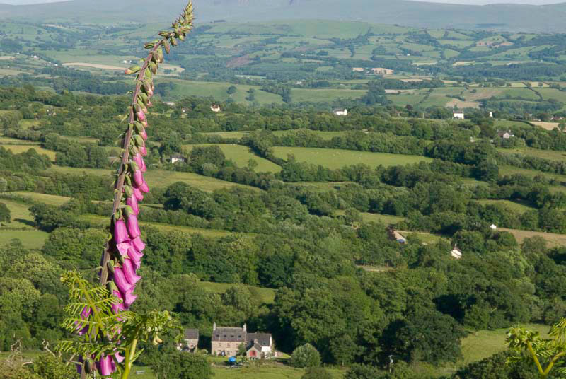 Above Glanyrafon looking back over Llansadwrn valley