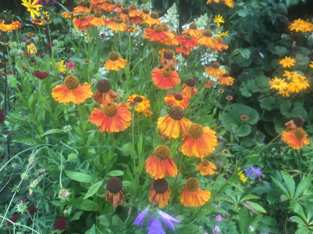 Open garden flowers